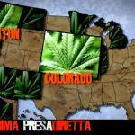 presadiretta-erba-del-vicino-cannabis-620x300